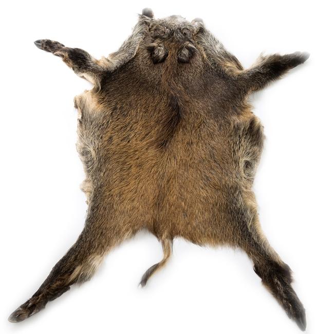 Peau de sanglier tapis chasse chasseur animal sauvage peau de bête décoration tannage à l`ancienne direct tannerie importateur grossiste fournisseur trappe france